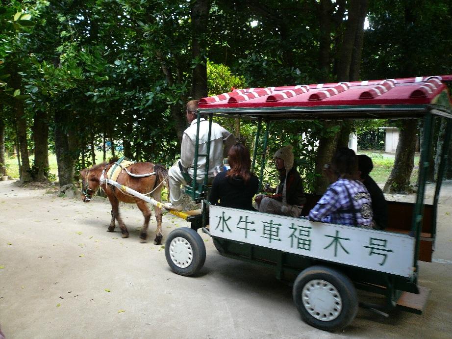 水牛車で観光できます!