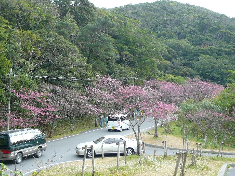 桜並木がキレイです!