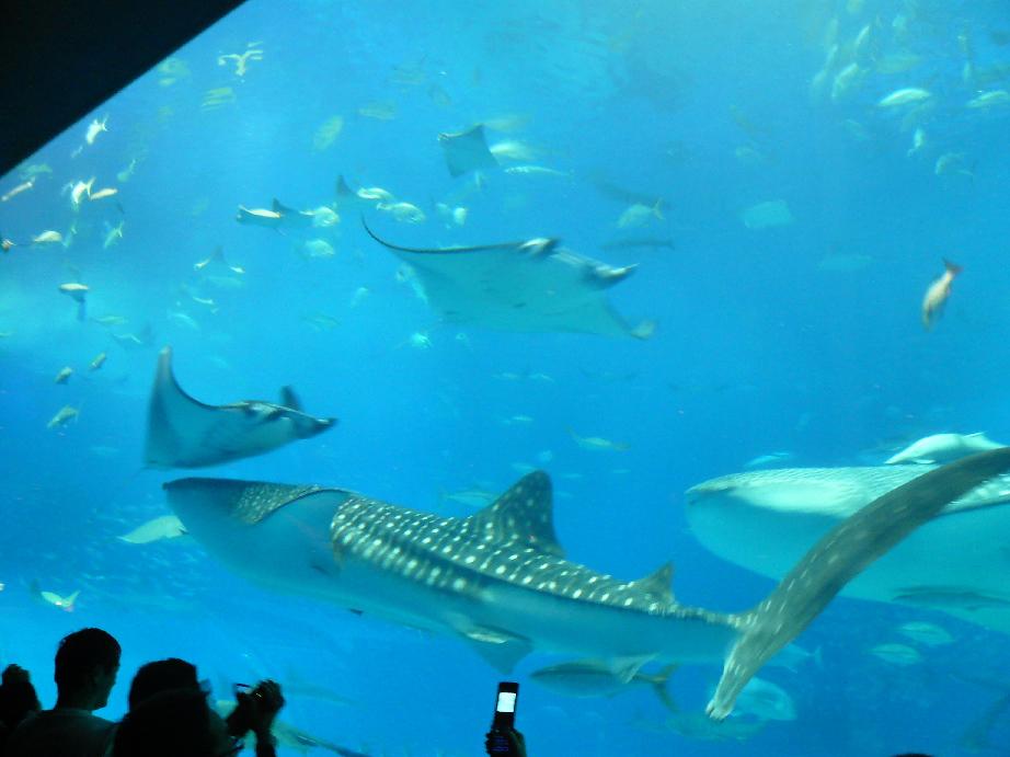 美ら海水族館のすぐ近くの民宿!